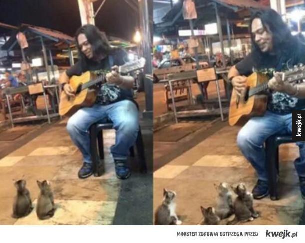 kotki słuchają jak pan gra :D