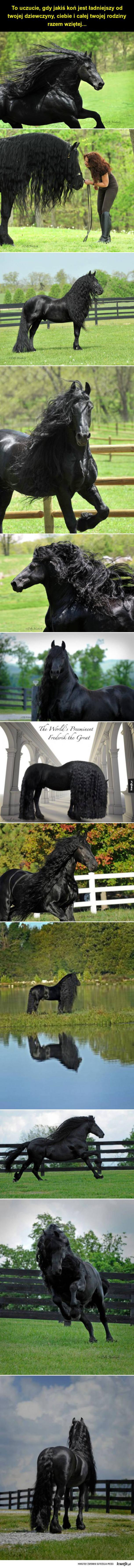 Niesamowicie fotogeniczny koń