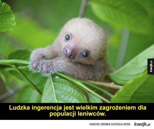 Ośrodek opiekujący się leniwcami musi być świetnym miejscem!