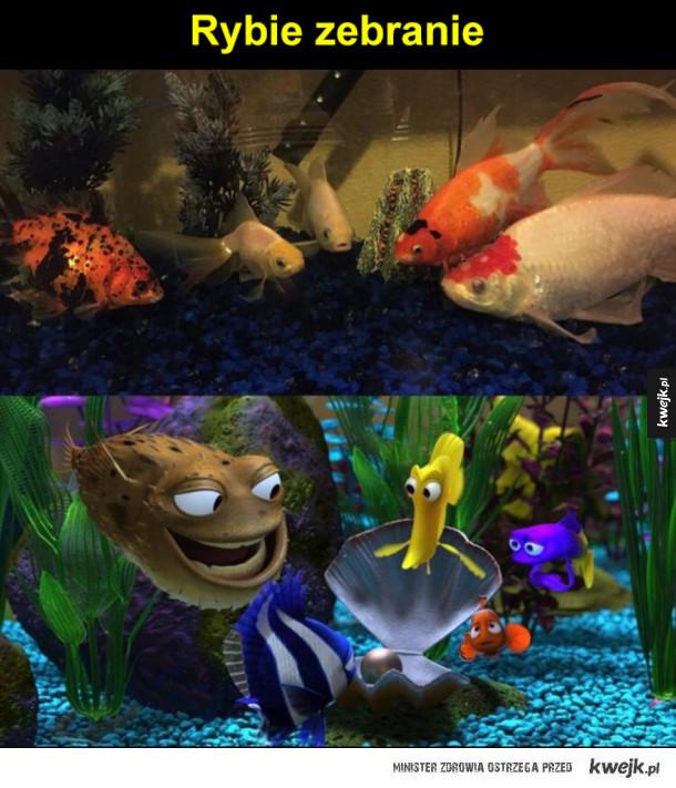 rybie zebranie