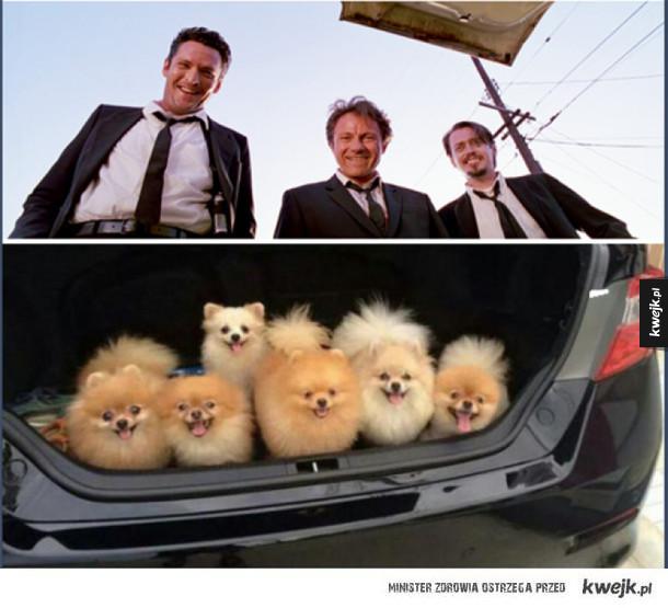wściekłe psy