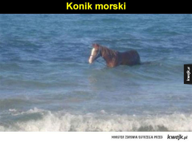 konik polski