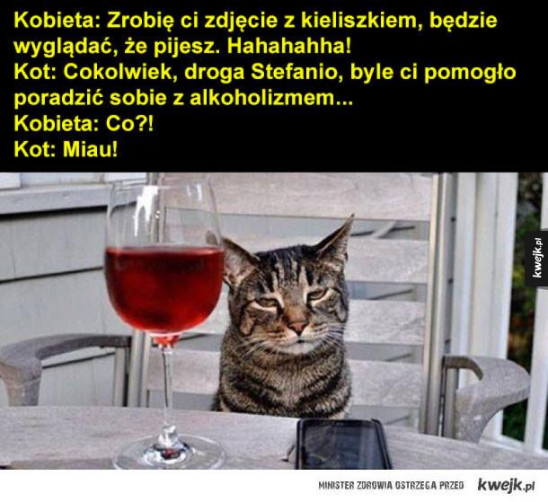 kot to przyjaciel kobiety