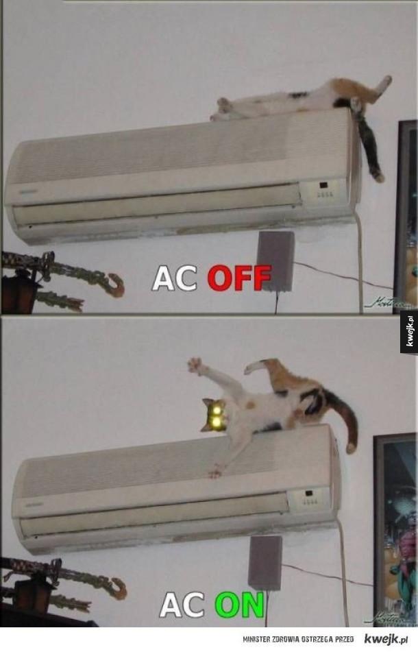 Klima i Kot