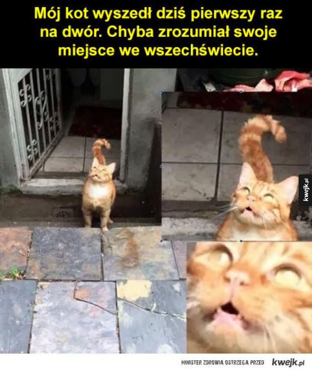 koteł odkrył świat