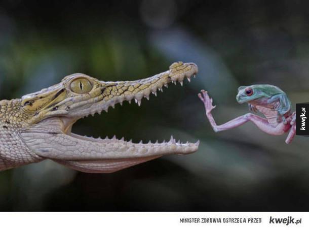 Żaba ogarnia sztuki walki