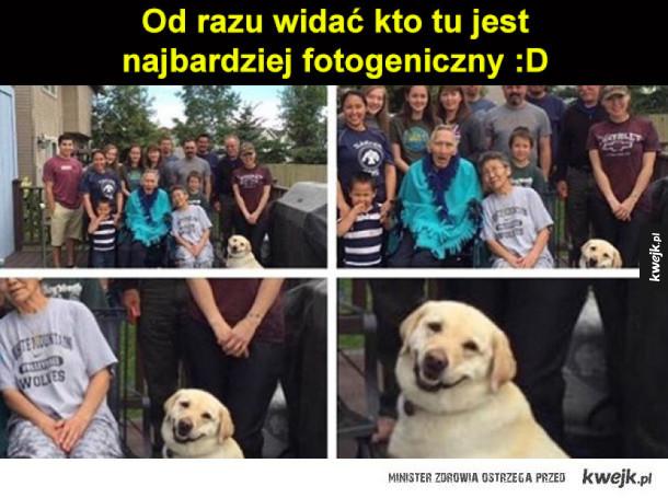 Fotogeniczny pies
