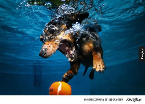 Niesamowite podwodne zdjęcia