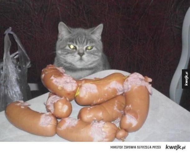 Jestem kotem i to ja tu rządzę!