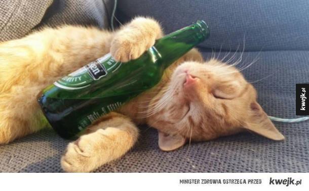 Kot lubi piwo