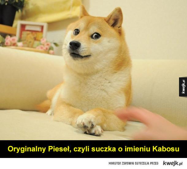 Z okazji Dnia Psa - słynne internetowe pieski