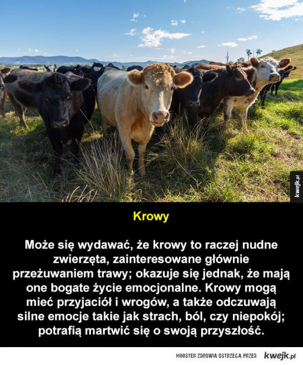 Inteligentne zwierzęta