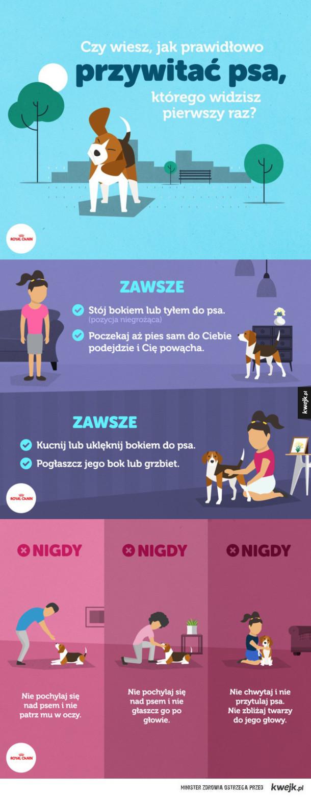 Jak witać obcego psa