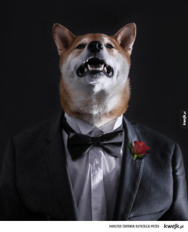 Dobrze ubrany pies