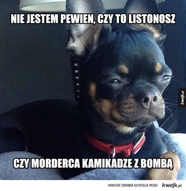 Problemy psa