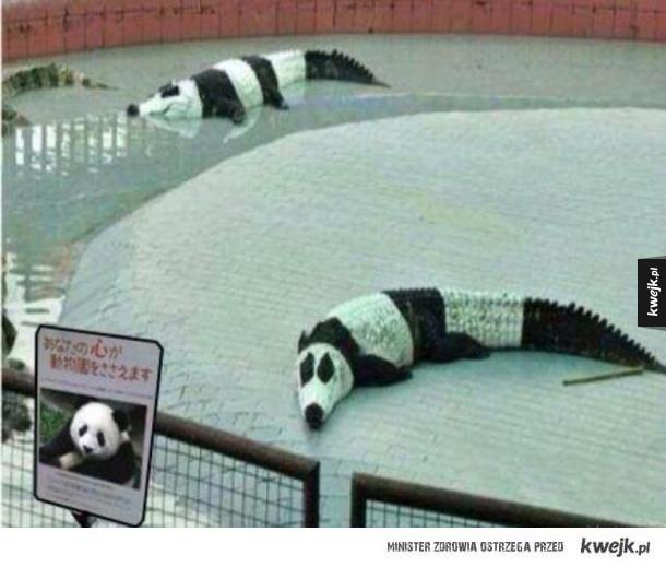 Tymczasem w krainie chińskich podróbek...