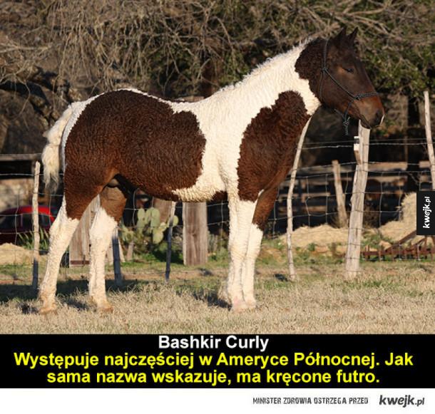 Unikatowe rasy koni z całego świata