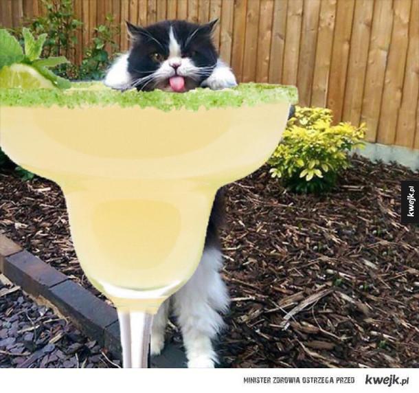 paskudny kot alkoholik