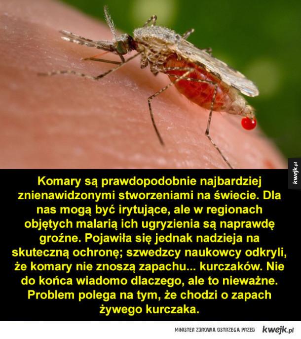 Czego nie lubią komary oraz inne ciekawostki na dziś