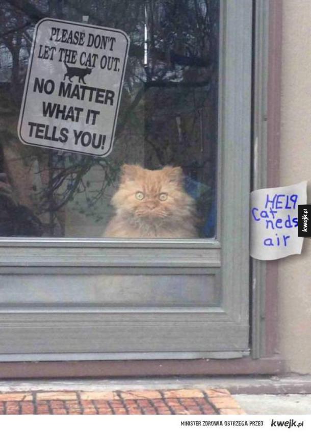 kot kłamie