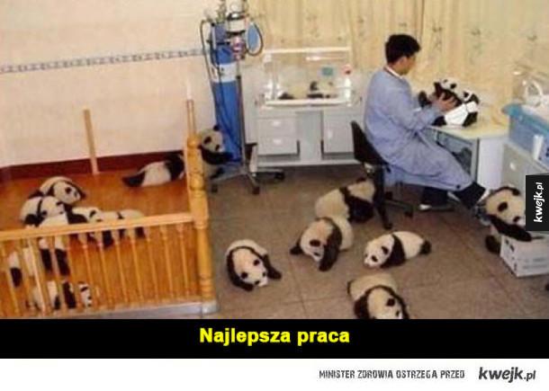 pandy :3