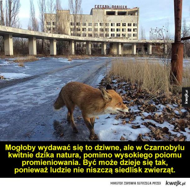 Zwierzęta w Czarnobylu