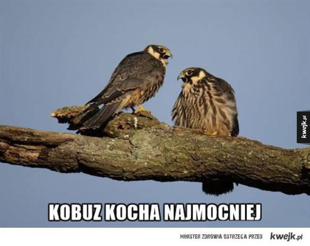 kobuz