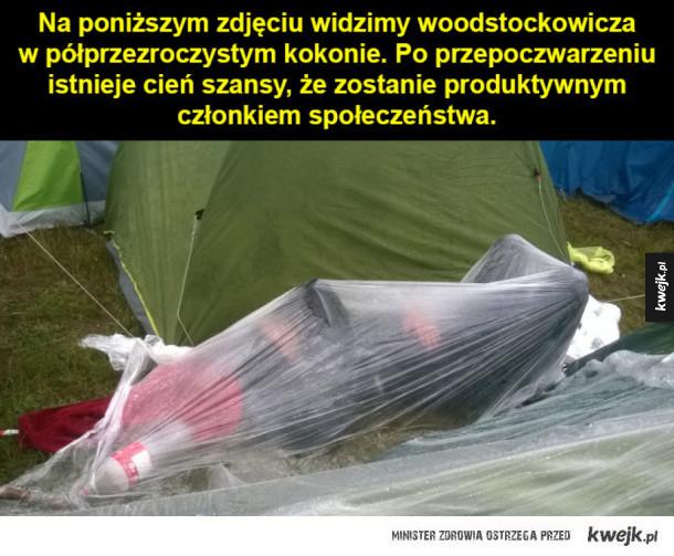Woodstokowicz