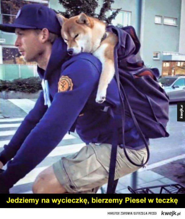 Pieski w nosidełkach i plecakach