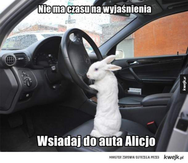 wsiadaj alicjo