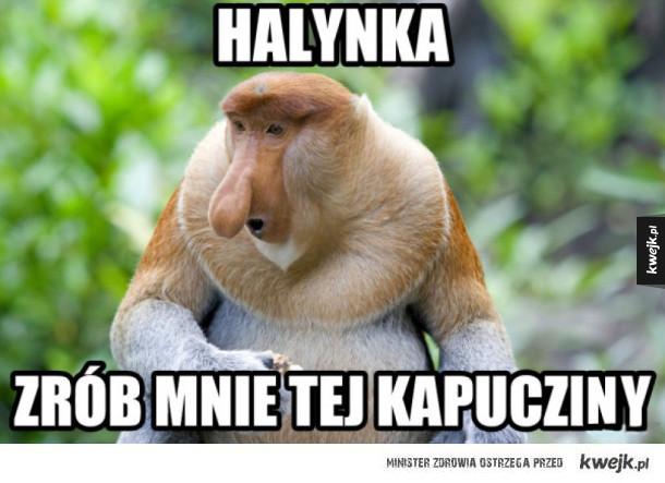 kapuczino