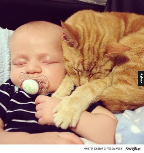 Koty i dzieci to przesyt słodkości