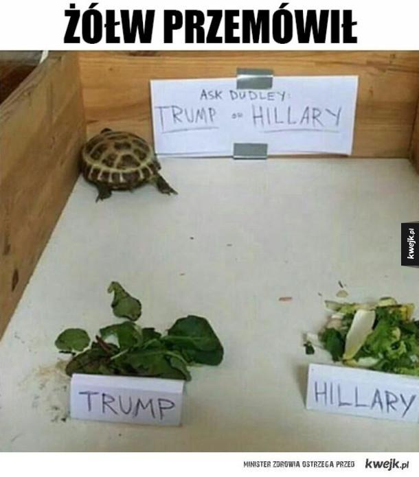 Żółwi ekspert