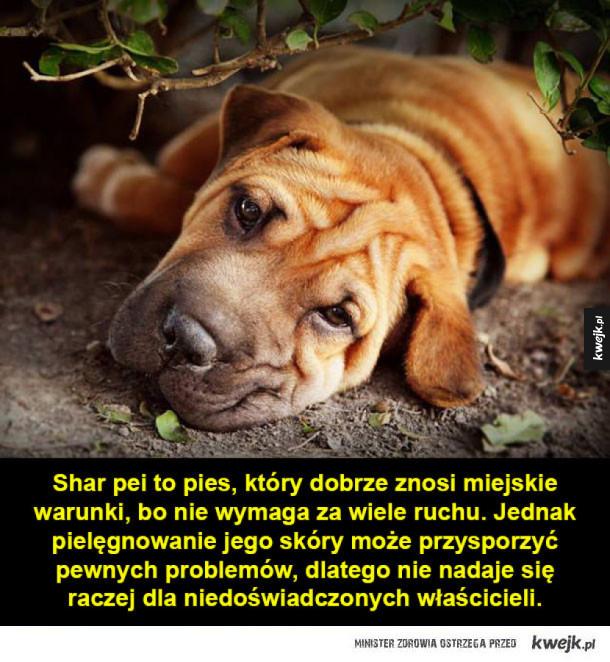 Rasy psów odpowiednie dla mało aktywnych osób