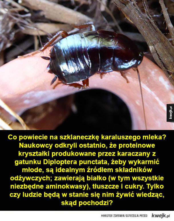 Mleko z karalucha i inne naukowe ciekawostki na dziś