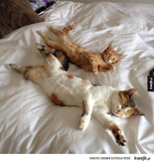 Po prostu kotki, nie szukajcie drugiego dna