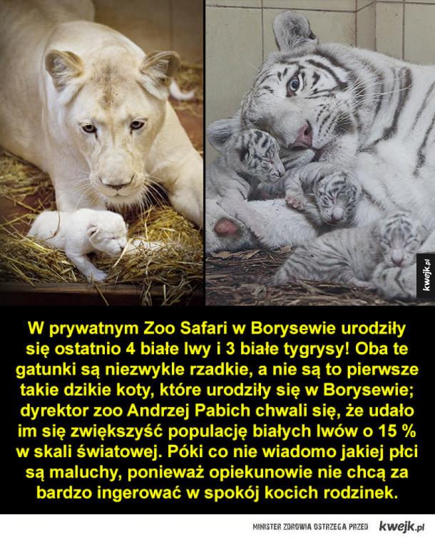 Wielki sukces polskiego zoo!