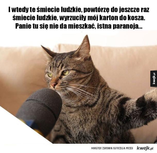 Wywiad z kotem