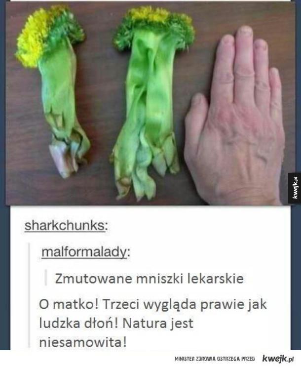 Mutanty
