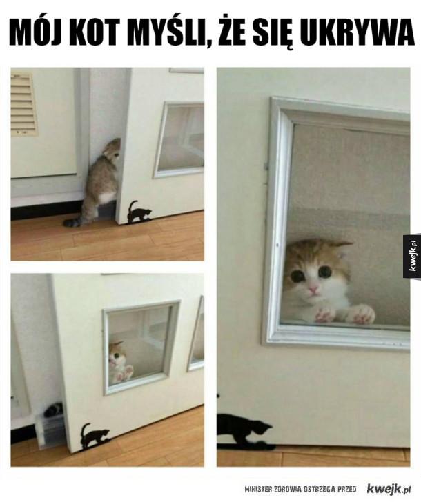 Sprytny kot