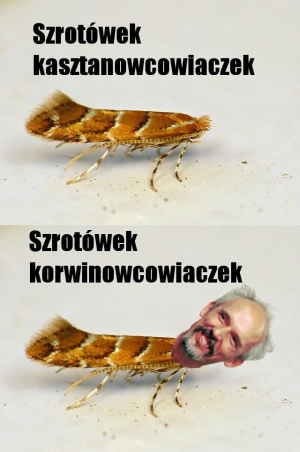 Nowy gatunek
