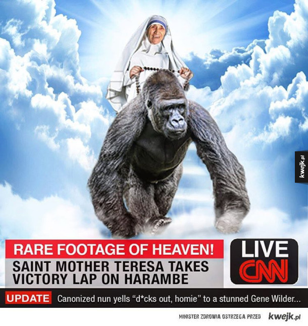 ... Out for Harambe!