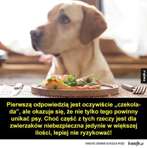 Czego nie powinny jeść psy?