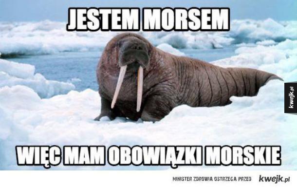 Morseł