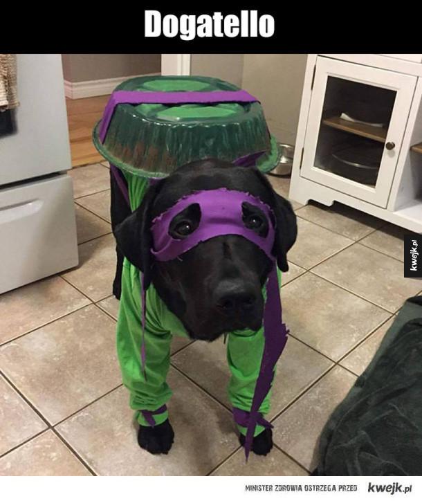 Wojowniczy pies ninja