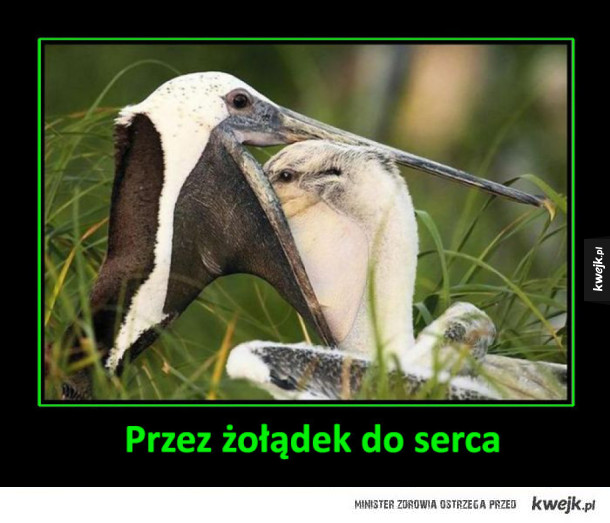 Pelikany