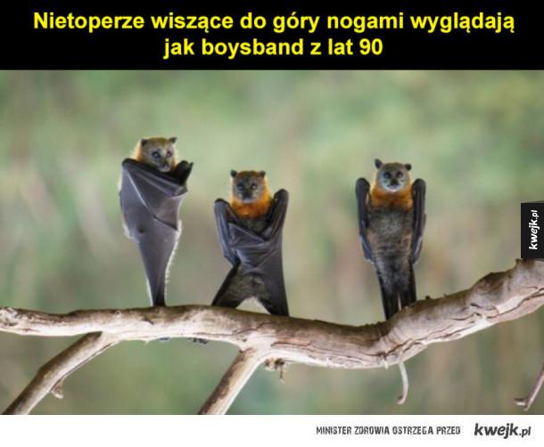 Nietoperki
