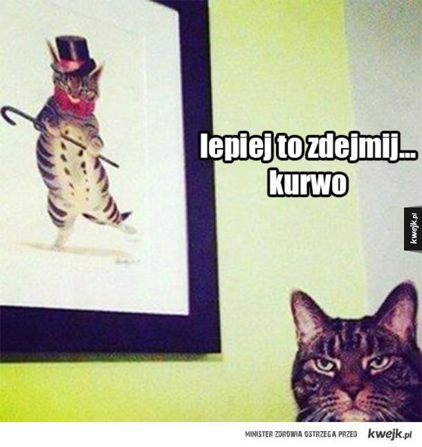 Kot się wściekł