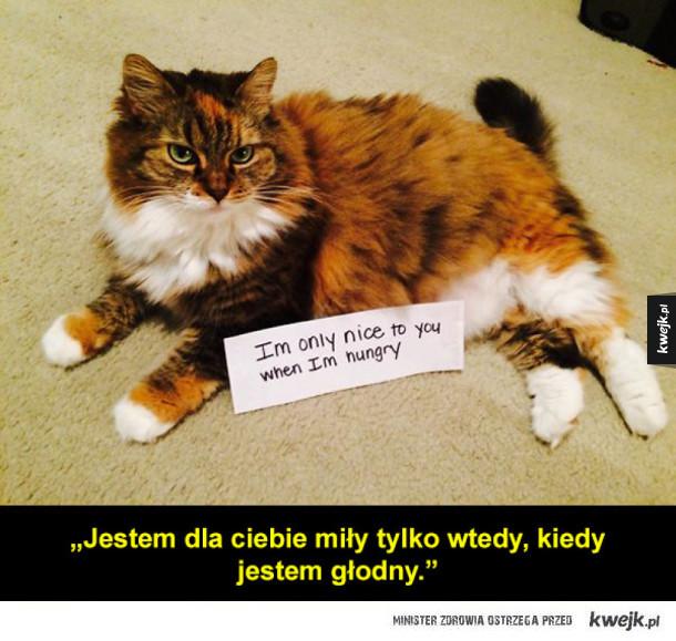 Bardzo zawstydzone koty
