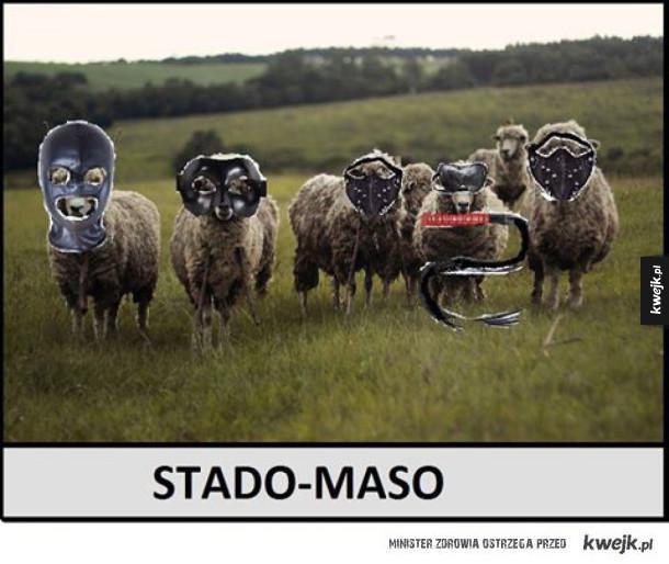 Stado owiec w wersji sado-maso